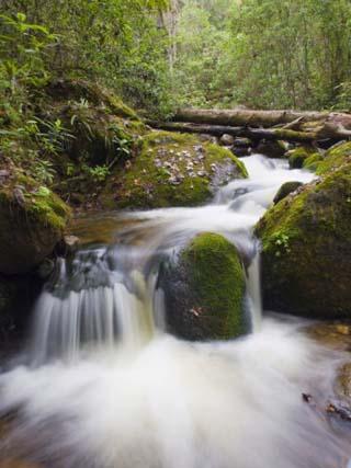 River in Parque Nacional Montana De Celaque, Gracias, Honduras, Central America