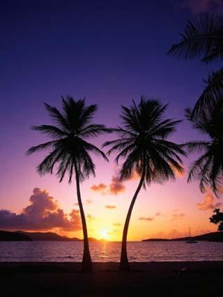 Twin Palms at Sunset