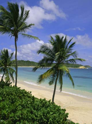 Palm Trees and Beach, Half Moon Bay, Antigua, Leeward Islands, Caribbean, West Indies