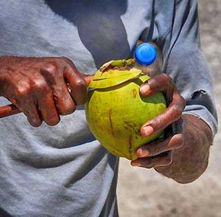coconuts barbados