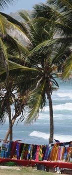 barbados palm trees and atlantic ocean