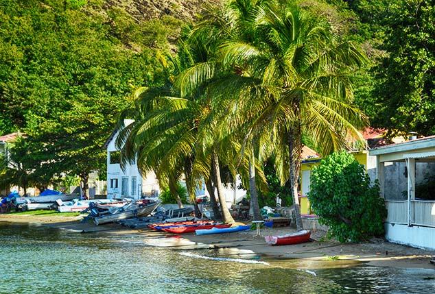 palm trees guadeloupe