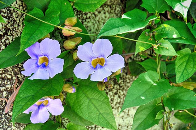 flowers guadeloupe