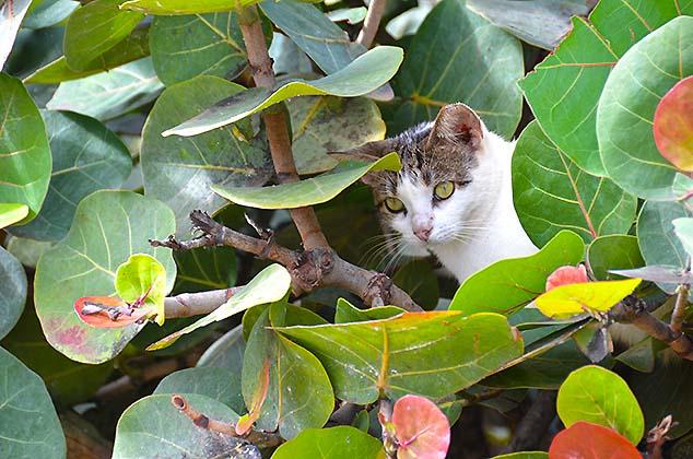 cat old san juan