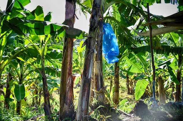 banana bag st. lucia