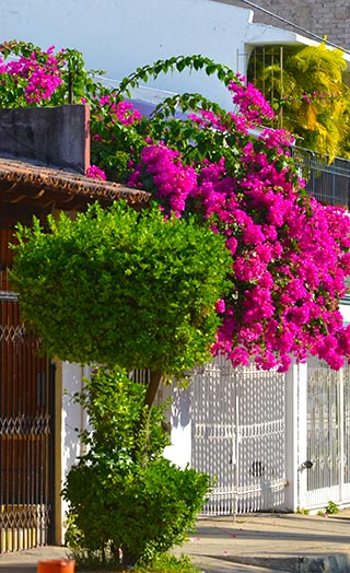 street flowers huatulco mexico