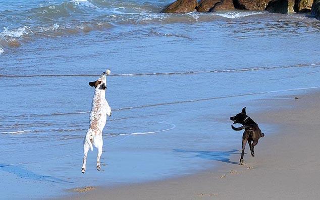 dogs puerto vallarta