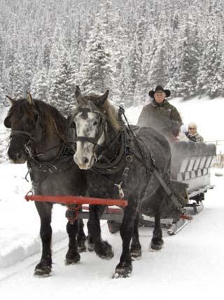 Winter Sleigh Ride, Lake Louise, Alberta, Canada
