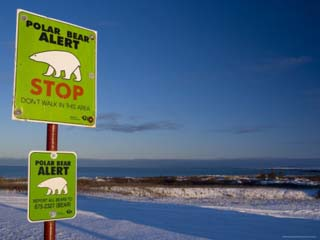 Sign, Polar Bear Alert at Hudson Bay, Churchill, Manitoba, Canada, North America