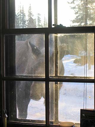 moose in the window