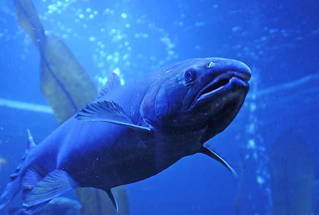 salmon juneau alaska