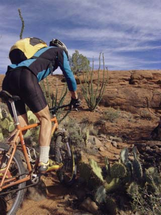 Rider Cycling Through Cacti, Arizona