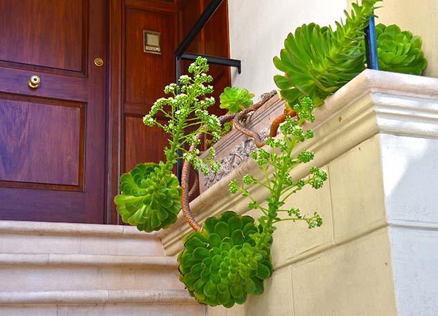 plant san francisco