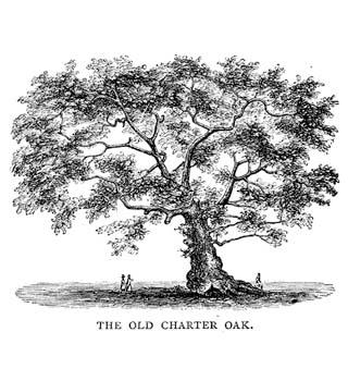old charter oak