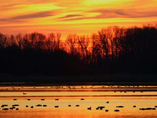 Scene at Bombay Hook National Wildlife Refuge, Delaware