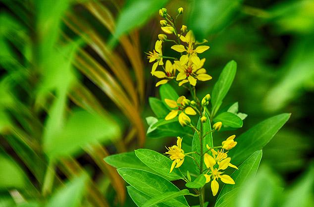 flowers key west