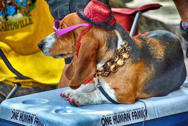 key west dog