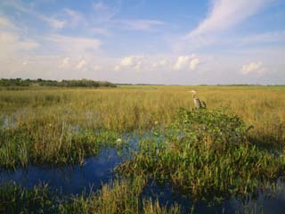 Usa, Florida, Everglades National Park