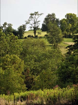 Rolling, Wooded Hills of the Maple Grove Road Rural Historic District