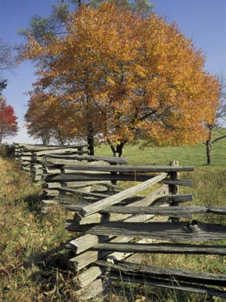 Split Rail Fence and Tree, Hensley Settlement, Cumberland Gap National Historic Park, Kentucky, USA