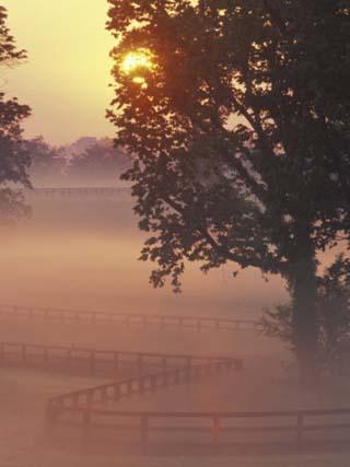 Foggy Sunrise on Horse Farm, Kentucky
