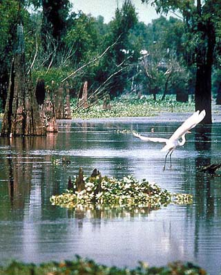 atchafalaya basin louisiana