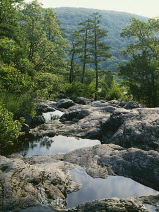 Pools on Mina Sauk Creek, Tom Sauk Mountain, Mark Twain National Forest, Missouri, USA