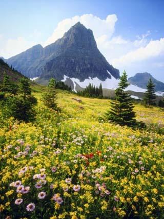 Wildflowers Growing in Mountain Meadow