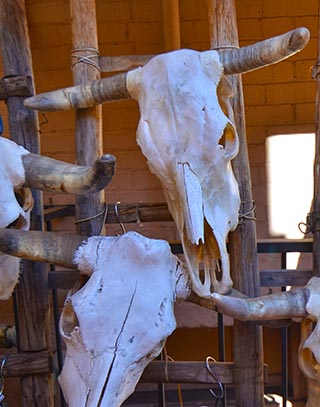 cattle skulls santa fe