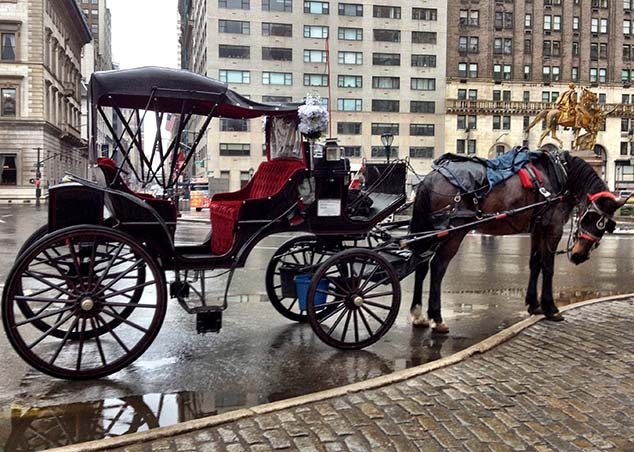 horse carriage new york city