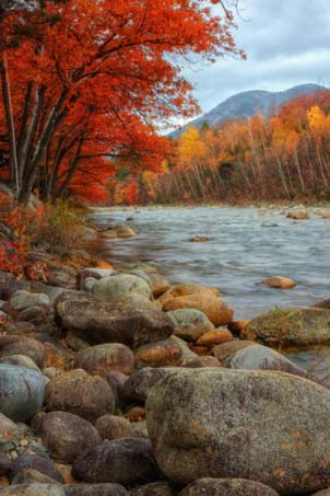 Pemigewasset Riverside in Autumn