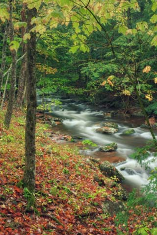 Early Fall Stream, Catskills