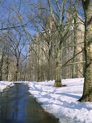 Bare Trees and Snow in Winter in Central Park, Manhattan, New York City, USA