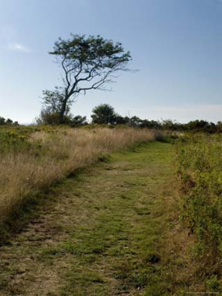 Grassy Pathway on a Sunny Day, Block Island, Rhode Island