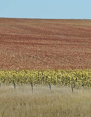 crops south dakota