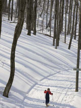 Little Boy Country Skiing on a Trail Through Snowy Woods, Canaan Valley, West Virginia