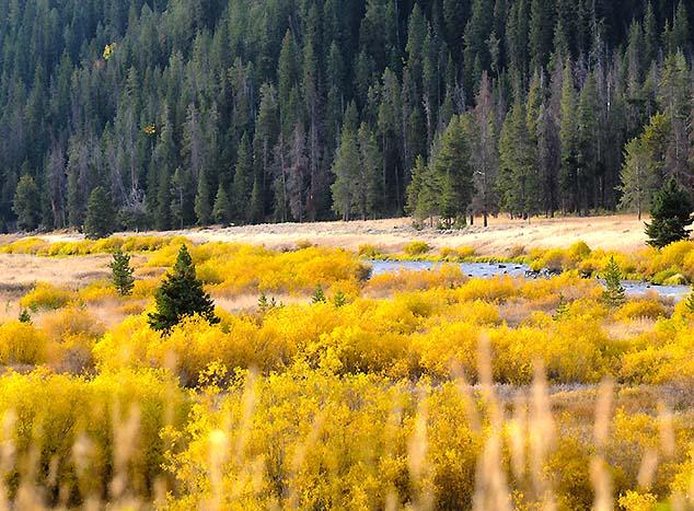 yellowstone scenery