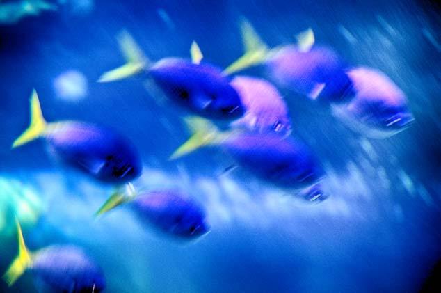 fish austalia