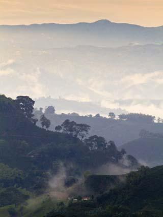 Colombia, Caldas, Manizales, Chinchina, Coffee Plantation at Hacienda De Guayabal at Dawn