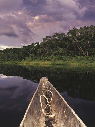 Napo Wildlife Center, Yasuni National Park, Amazon Basin, Ecuador