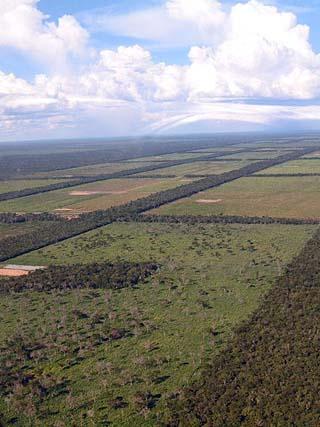 Chaco plains