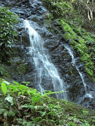 Small waterfall near brownsberg suriname